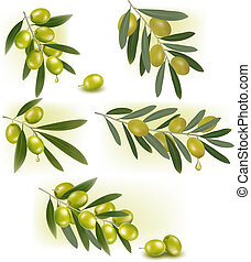 Set of backgrounds with green olives. Vector illustration.