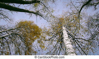 Panoramic shot treetops in autumn f