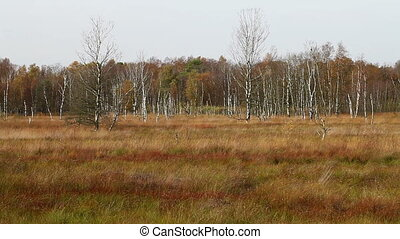Moor - Autumn - Dosenmoor with autumn colors -...