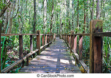 Wooden bridge through peat swamp forest
