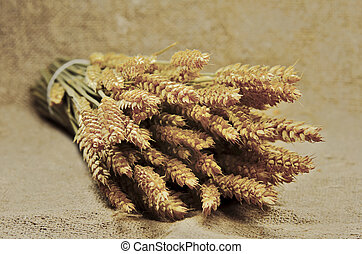 wheat - a bunch of wheat