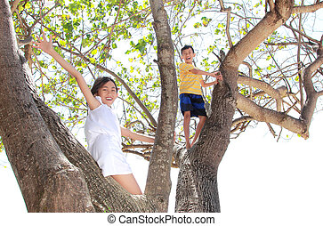 children on the tree - Two little boy and girl playing on...