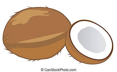 coconuts - vector coconuts