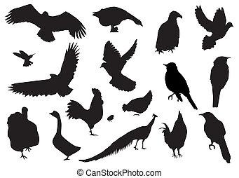 birds - vector birds silhouettes