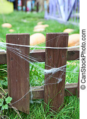 Wooden fence with web on planks and growing pumpkins on...
