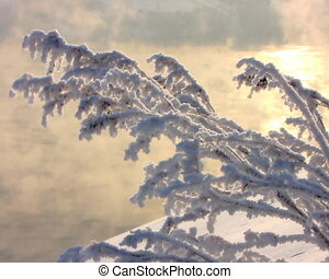Frozen branch. - Snow-covered branch