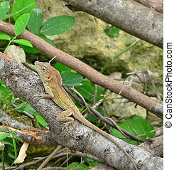 green lizard - Little green lizard clinging to a branch