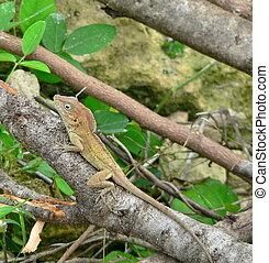green lizard - Little green lizard clinging to a branch.