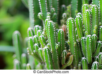Close up of cactus plants