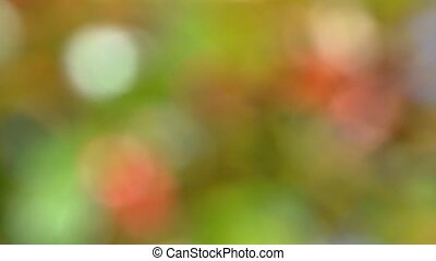 Soft focused leaves background - Soft focused tree leaves...