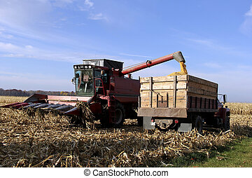 wisconsin corn harvest - combine filling a farming truck...