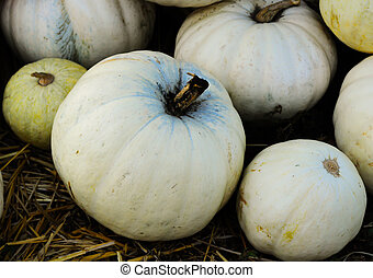 white pumpkins - a few white pumpkins