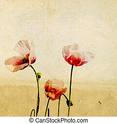 red poppy on grunge background