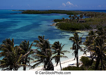 cabin's contoy - trees in the blue lagoon in isla contoy...