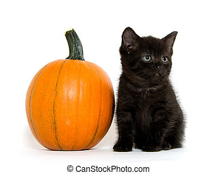 black kitten and pumpkin - Cute baby black kitten and...