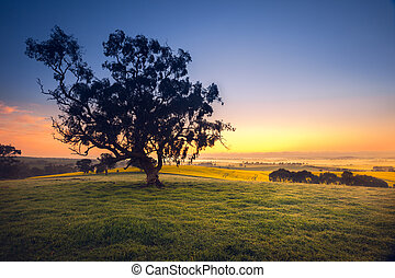 Australiana - Beautiful South Australian sunrise over rural...