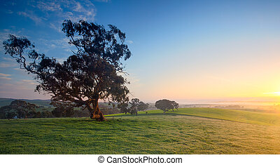 Fresh Rural Valley - Beautiful Field in the Clare Valley,...