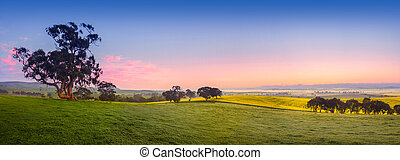 Fresh Field - Panoramic field in the Clare Valley, South...