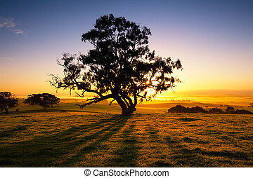 Meadow Dawn - Sun rises over the Clare Valley, South...