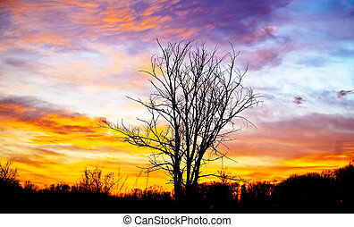 Black silhouette of a lone tree with a beautiful sunset. Landscape in the contre.