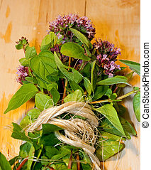 Organic bundle of Oregano herbs - a freshly picked bundle of...