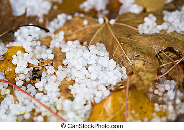 Hail on the ground with fallen leaves - Hail beens on the...