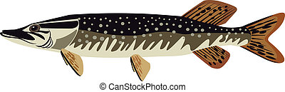 pike vector illustration