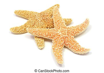 sea-star - a red sea star isolated on white background