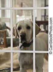fenêtre, chien