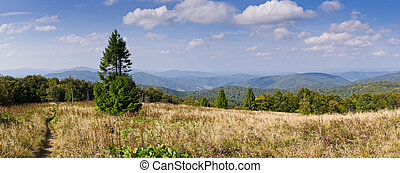 Panorama with lonely tree in Carpathians mountains