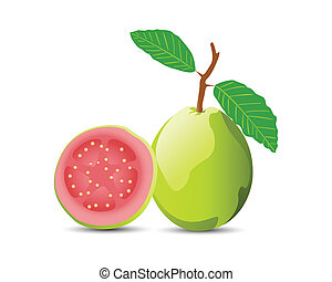 Guava - Adobe Illustrator vector image with solid fills and...