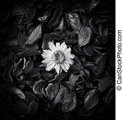 Abstract flower composition. Element of design.