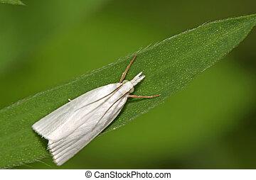 insectos, polillas