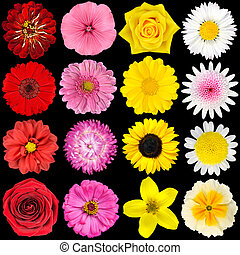 Various White, Yellow, Pink and Red Flowers Isolated on...