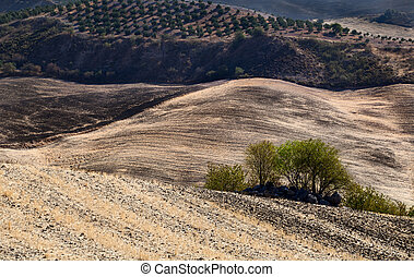 typicsl Andalucian landscape - typical abstract landscape in...
