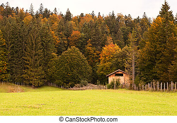 autumn forest in Alps - colorful autumn forest in Bavarian...