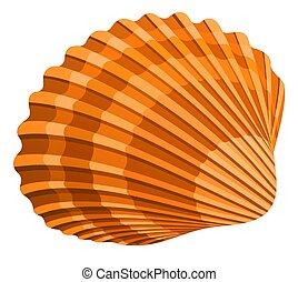 Seashell - illustration of seshell isolated on white