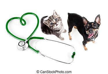 veterinario, gatos, Perros, otro, mascotas, concepto