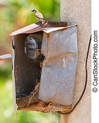 Sparrow and nest in a cabinet with electrical meter...