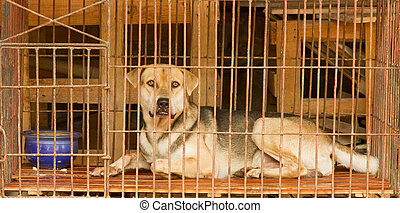 Dog in a cage in Vietnam. In Vietnam dogs are often used for...