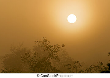 Misty forest to the rising day. - Sunrise in the foggy...