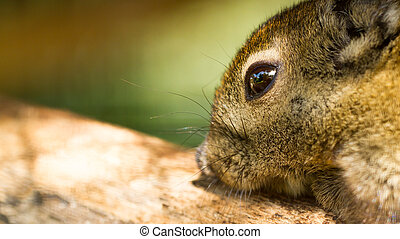 Closeup tree shrew, Small mammals native to the tropical...