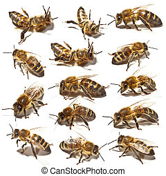 Bees collection  on white background