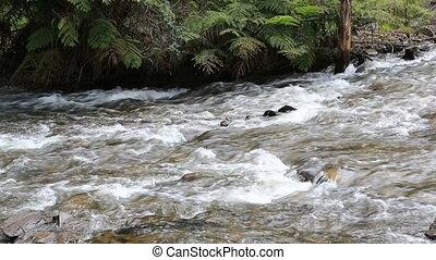 Flowing mountain stream at Maroondah, Australia