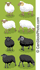 Sheep - Cartoon black and white sheep. You can arrange your...