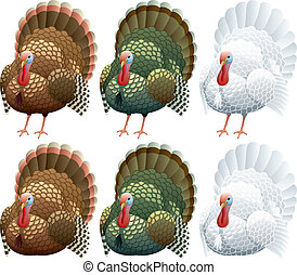 Turkey - Illustration of a turkey in 2 positions and 3 color...