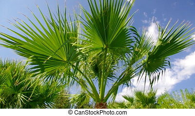 Palm tree against a blue sky.