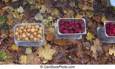 fresh red and yellow raspberry in autumn agriculture fair