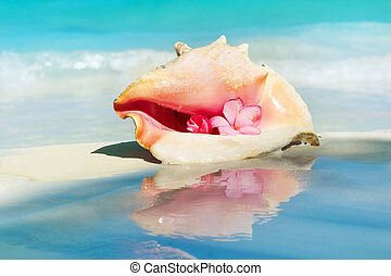 Conch Shell on The Beach Sand. Caribbean