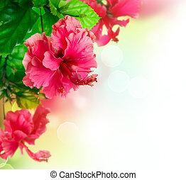 Hibisco, flor, borda, desenho, sobre, branca